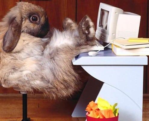 Office Rabbit